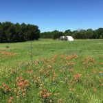 pasture-with-wildflowers