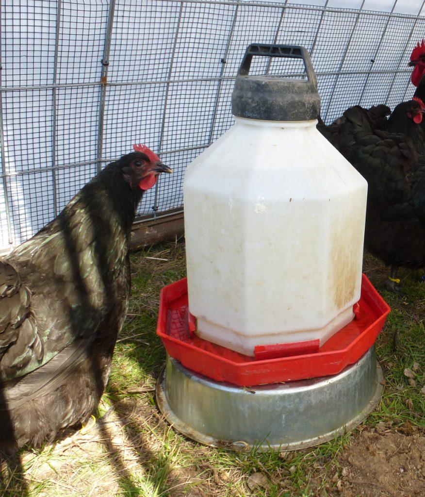 5-Gallon Plastic Chicken Waterer