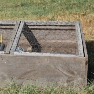 Thumbnail image of a chick brooder