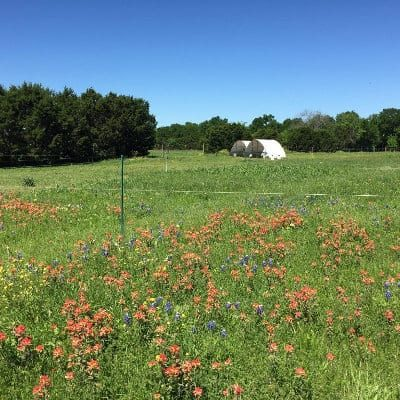 Pasture with wildflowers